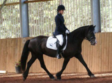 Riding a horse in bright equine building with ventilated wall cladding